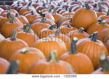Many Pumpkins