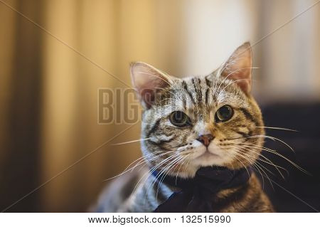 Portrait cat cute cat resting cat on a table