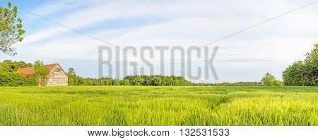 Rural green landscape panorama with wheat field and old barn, blue sky