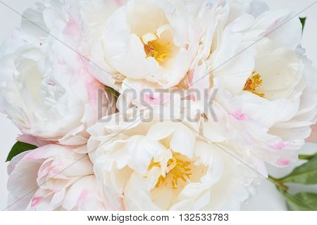 Bunch of white and pink peonies as flower background