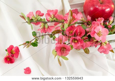 Japanese Rose Flowers On White Fabric