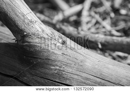 A small spider sits on a tree branch in the woods. Black-and-white photograph.