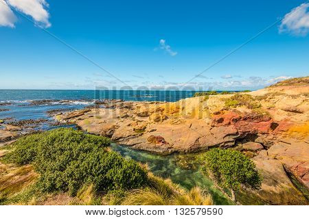 New Zealand colorful coastline landscape with fur seals at Otago Region Southern island New Zealand - circular polarizing filter