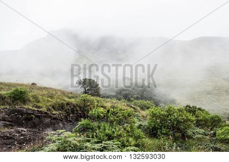 View of the hill slopes of Western Ghats while travelling to Eravikulam National Parkin Kochi on a foggy day. On the background, lush green trees are seen.