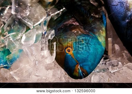 Dead parrot fish for sale on ice. Big colorful fish with big orange eyes under ice.