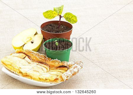 New Beginnings Apple Pip Through Seedling to Golden Pastry and Juicy Fruit Slices poster