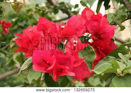 Flor Vermelha em fundo de plantas verdes poster