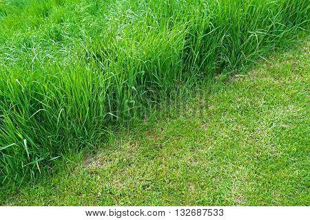 mown grass and uncut grass on garden