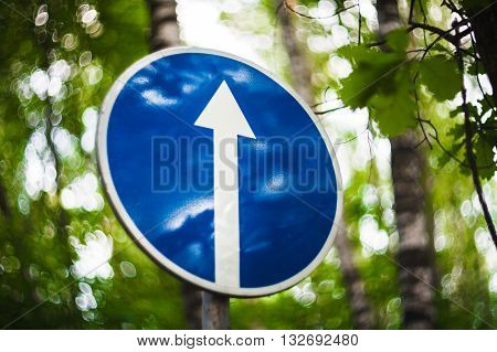 The blue road sign with a white arrow ordering the movement directly in the green wood