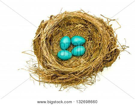 Robins nest of four eggs on an isolated background