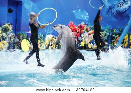 Cute Dolphins During A Speech At The Dolphinarium