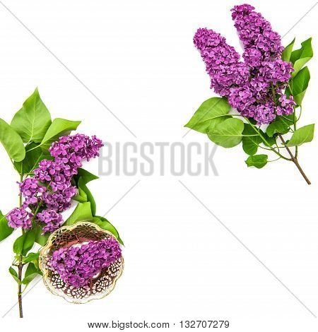 Lilac flowers on white background. Spring bloossoms. Top view