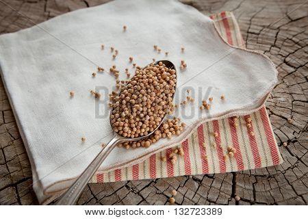 Coriander seeds in a spoon Coriandrum sativum