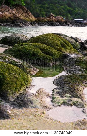 Moss covered on rocks at the beach