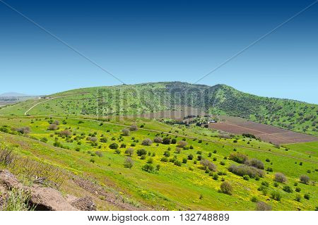 Meadows in Golan Heights Early Spring in Israel