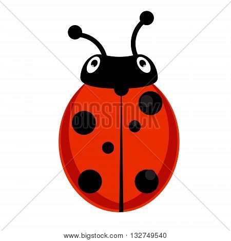 Vector illustration insect ladybird. Cute ladybug cartoon icon flat design.