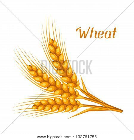 Bunch of wheat, barley or rye ears. Agricultural image for decoration bread packaging, beer labels, brochures and advertising booklets.