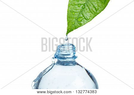 A bottle filled with fresh water drops from a green wet leaf. Freshness and purity of water concept. Objects on white.