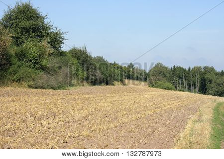 Harvested grain field with a forest in the background