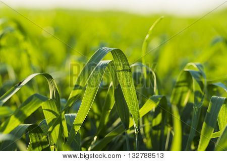 Sown Farm Field