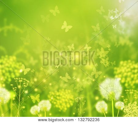 Beautiful summer time nature background with field flowers and butterflies. Green sunny summer day with dandelions, butterflies and field flowers. Summer positive background. Spring or summer concept.