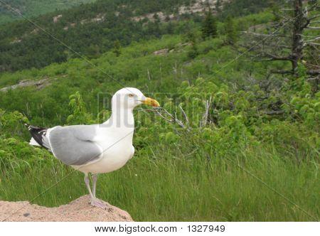 在岩石上的海鸥