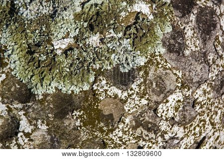 Texture Of Lichen Fungus And Moss Covered Dimpled Surface