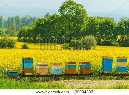 Colorful Wooden Apiaries and the Rapeseed Fields in Malopolska Region Poland Europe.