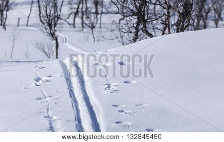 Cross country tracks on a mountainside. Newly fallen snow and sunshine. Trees and shadows in the background.