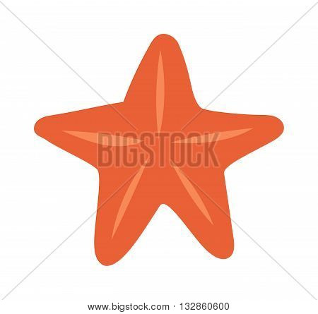 Sea star on white background and Sea star vector illustration. Sea star ocean, beach tropical nature and sea mollusk aquatic animal star. Summer decoration exotic sea star marine tropical nature.
