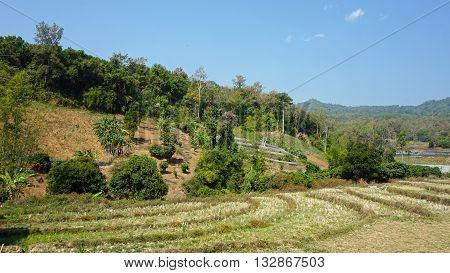Green Landscape In Thailand