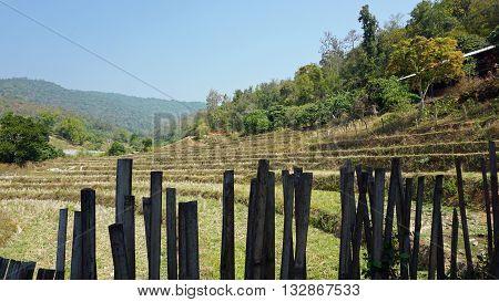 green landscape in doi inthanon national park