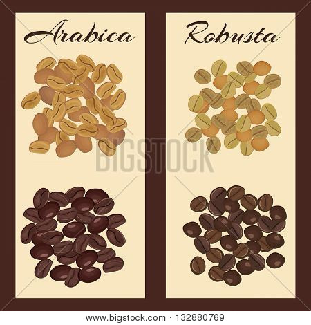 Arabica and robusta coffee beans. Green and roasted. Vector illustration.