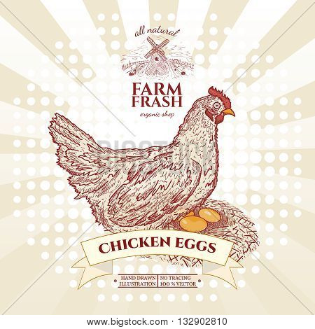 Farm fresh chicken eggs hen in nest with eggs vector