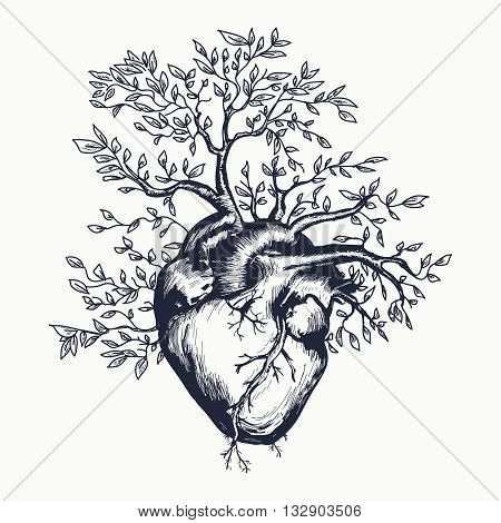 Anatomical human heart from which the tree grows vector illustration