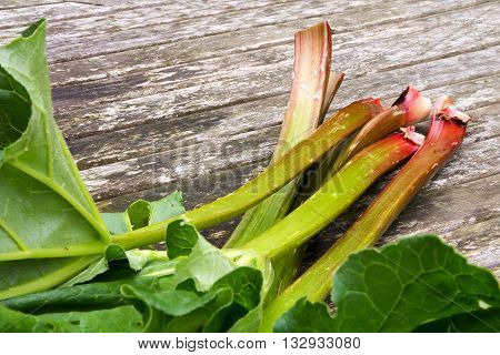 rhubarb stalks with leaves freshly picked from the garden on rustic wood selected focus narrow depth of field