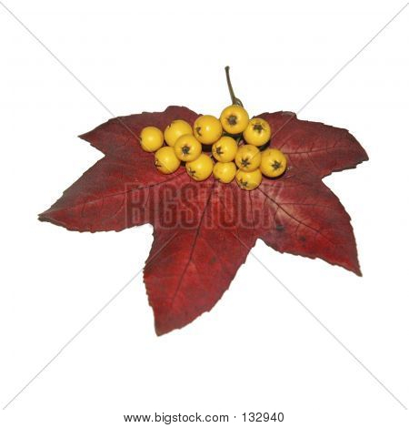 Leaf And Berries