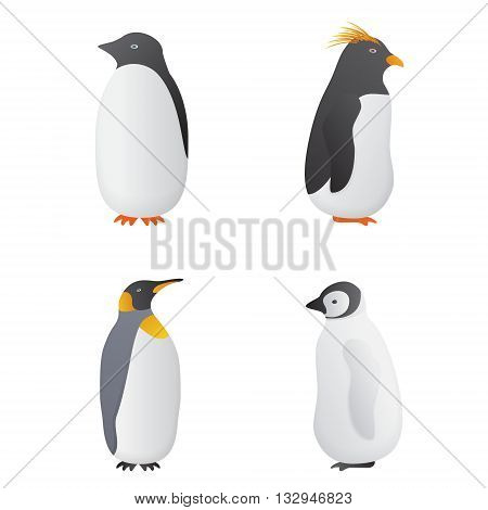 Penguins isolated on white background. Penguins vector illustration. Set of penguins. Penguin icon.