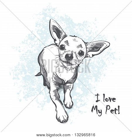 Funny puppy chihuahua. Contour cartoon vector illustration