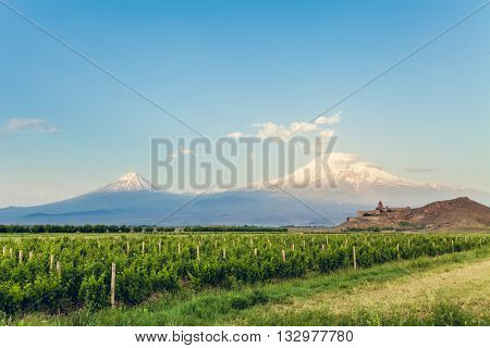Grape field in Ararat valley. View of Khor Virap and Mount Ararat. Exploring Armenia