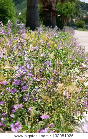 Lush undergrowth spring meadow flowers purple color