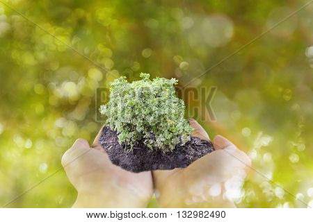 Sprout Or Small Plant On Hand With Bokeh Green Tree Bokeh Background, Environment Tree And Forest Sa