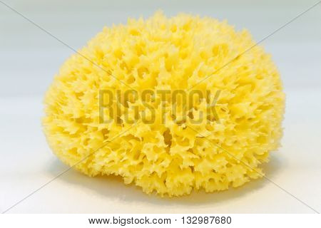 The loofah (sponge) yellow color from natural plant from the seabed