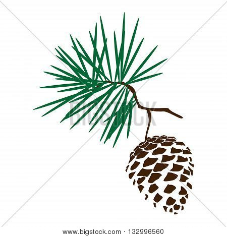 pinecone images illustrations vectors pinecone stock