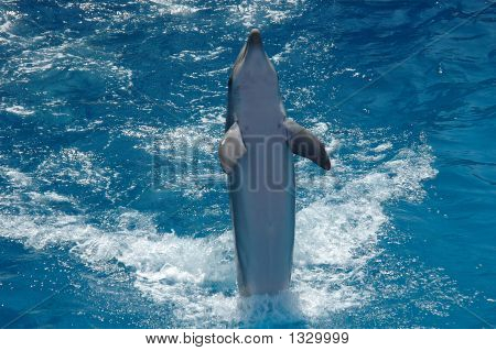 happy dancing dolphin in the blue waters poster