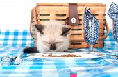 Cute kitten eating from blue bowl in front of picnic basket poster