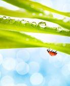 Ladybug on a green grass poster