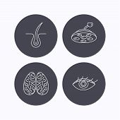 Eye, neurology brain and surgical lamp icons. Trichology linear sign. Flat icons in circle buttons on white background. Vector poster