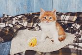 Cute kitten. Ginger kitten with white chest. Long haired red orange kitten sit at brown plaid blanket. Sweet adorable kitten on a serenity blue wood background. Small cat with toy ball. Funny kitten poster