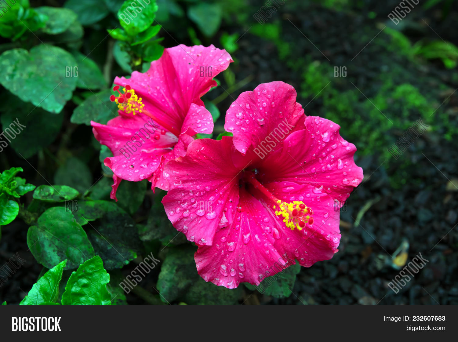 Close Flowers Pink Image Photo Free Trial Bigstock